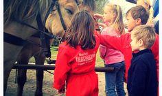 Blijft imposant & boeien, paarden. FarmCamps ' t Looveld in Zweelo Drenthe Film, Movie, Film Stock, Cinema, Films