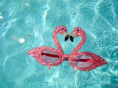 Flamingos in the pool by BB and HH, via Flickr