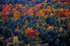 Karantere forest, Drama, Greece