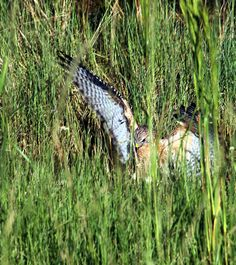 Viera Wetlands, Viera FL Brevard County, Footprint, Coast, Florida, Explore, Places, Life, Animals, The Florida