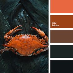 almost black, blue-green, boiled crab color, boiled lobster color, bright orange, bright red-orange, brown colour, dark teal color, red with a touch of brown, saturated green, shades of dark green, tan color, teal color. Warm Color Schemes, Color Schemes Colour Palettes, Red Colour Palette, House Color Schemes, House Colors, Color Combos, Warm Colors, Color Red, Color Palette Challenge