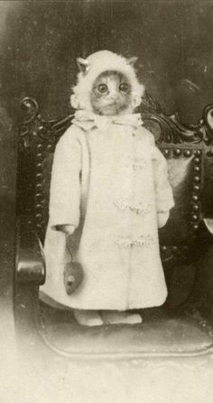 Bizarre vintage photo of cat. Proof that people have been dressing animals in costumes for ages:)