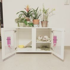 Indoor rabbit hutch                                                                                                                                                                                 More
