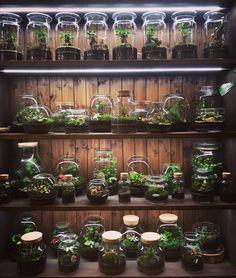 Přijďte nahlédnout do jiných světů za sklem... Plants, Atelier, Plant, Planets