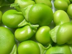 Beans are a good source of nutrition's. Learn more about Types of Beans Grilled Polenta, Grilled Fish, Types Of Beans, Fava Beans, Small Succulents, Pork Roast, Agriculture, Seasons, Fruit