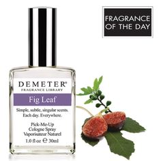 The first week of November is National Fig Week. The Common Fig tree, which produces Fig, was one of the first cultivated plants, with samples founding dating back over 11,000 years, pre-dating wheat and rye by 1,000 years. To kick-off the first week of November, today's Fragrance of the Day is Fig Leaf. Click www.DemeterFragrance.com to receive for 50% off with code 3363240.