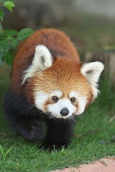 Wonderful Nature And Wild Life - Google+