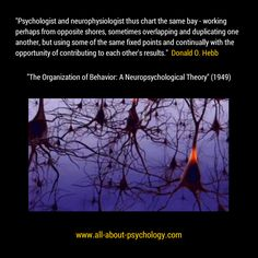 "Quote by Donald O. Hebb from his seminal work ""The Organization of Behavior: A Neuropsychological Theory"" (1949). Studying psychology? Click on image or Go here --> www.all-about-psychology.com"