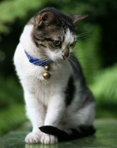 purrrr , a person looks such as a cat, nevertheless What exactly are YOU? that is extremely adorable! Bell The Cat, Birds And The Bees, Kinds Of Cats, Cat Care Tips, Image Cat, Dog Id Tags, Cat Behavior, Cat 2, Domestic Cat