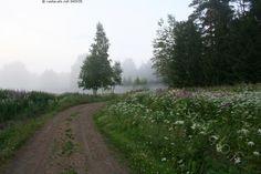 Suomen kesäyö - tie kukkaniitty puu sumu soratie kesä ilta kesäyö sumuinen usva hämärä kaarre maaseutu
