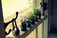 herb garden hung on hooks in window