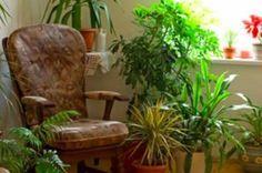 Un aliment de cuisine qui peut vous aider à revigorer vos plantes noté 3.5 - 2 votes Prendre bien soin de ses plantes n'est pas toujours de tout repos. Que vous n'ayez pas la main verte ou que vous sachiez au contraire très bien les préserver, il y a toujours des moments où les plantes...