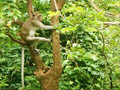Monos en #Tailandia Kangaroo, Animals, Thailand Travel, Rompers, Baby Bjorn, Animales, Animaux, Animal, Animais