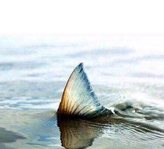 Meerjungfrau...? Ich bleibe lieber Mensch..kann mich dann in beiden Elementen bewegen.