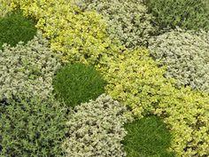 1000 id es sur le th me plantes couvre sol sur pinterest for Jardin japonais plantes couvre sol