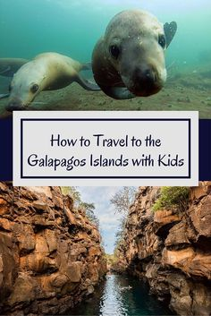 Everything you need to know to travel to the Galapagos with kids- a dream vacation for many families! Learn where to visit, and how to get there without breaking the bank!