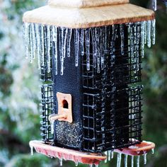 Bird feeder ice