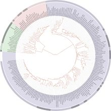 """Graphical representation of the modern """"Tree of Life"""" on the Web project - wikipedia"""