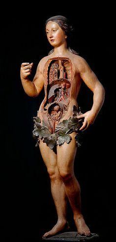 "Venus- From the ""Anatomie des Vanités"" exhibit at the Erasmus House in Brussels, Belgium. 18th century."