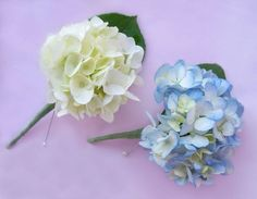 White hydrangea boutonniere for mother of the bride and godmothers. Hydrangea Corsage, Hydrangea Boutonniere, Blue Hydrangea, Hydrangeas, Boutonnieres, Groomsmen Boutonniere, White Boutonniere, Corsage Wedding, Wedding Bouquets