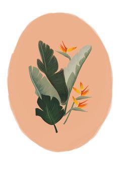 Tropico by Cocorrina