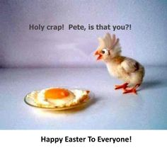 22 Funny 'Easter Memes' Jokes 2020 with Funny Egg & Bunny Pics Happy Easter Meme, Funny Easter Jokes, Funny Easter Pictures, Funny Easter Bunny, Happy Easter Wishes, Funny Eggs, Easter Wishes Messages, Easter 2020, For Facebook