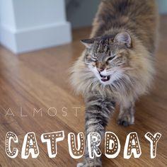 It's almost #Caturday, y'all!!  @tabbyjamesco