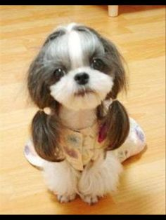 Cho cuteeee