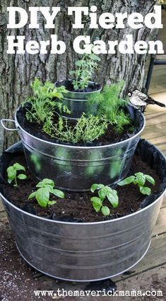 Learn how to build a tiered herb garden using three galvanized steel tub buckets with plants. Herbs include basil, oregano, parsley, thyme, mint and more. * For more information, visit image link.