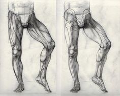 Exceptional Drawing The Human Figure Ideas. Staggering Drawing The Human Figure Ideas. Drawing Legs, Body Drawing, Life Drawing, Male Figure Drawing, Figure Drawing Reference, Anatomy Reference, Body Sketches, Anatomy Sketches, Leg Anatomy
