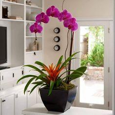 Orquídea Phalaenopsis 'Pink Twilight'.