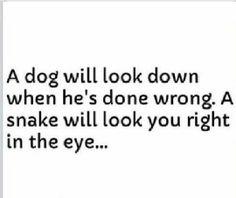 Dog vs snake
