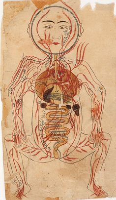 Persian Medical Front Anatomy برگ مصور از کتاب تشریح بدن منصور بن محمد بن احمد بن یوسف بن الیاس شیرازی،1384 میلادی. A sample from an illustrated treatise in Persian on human anatomy, usually referred to asTashrīh-i Mansūrī (Mansūr's Anatomy) from Ibn Ilyās, Manṣūr ibn Muḥammad, fl. 1384.