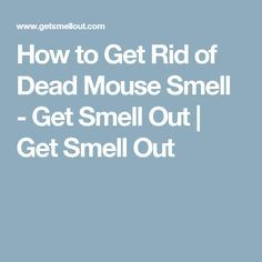 Find out how to get rid of dead mouse smell from your duct work, walls, floor boards, and your car. Dead Mouse Smell, How To Get Rid, How To Remove, Getting Rid Of Rats, Car Smell, Urine Smells, Odor Remover, Odor Eliminator, House Smells