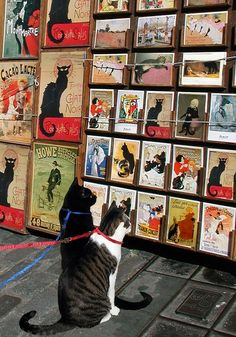 Cats looking at cat art...haha!