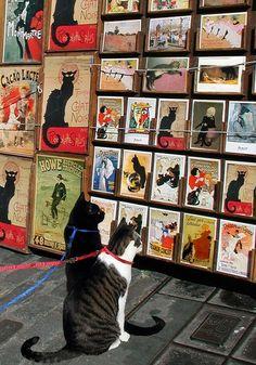 Cats looking at cat art