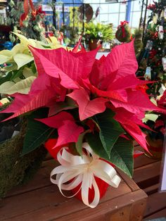 Which poinsettia speaks to you -- traditional red, fantastical glitz, or something in between?