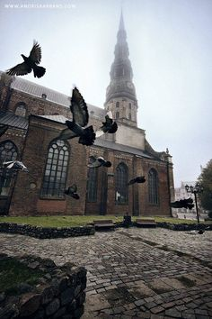 Pigeons near the St. Peter's Church in Riga!