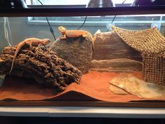 Bearded dragon terrarium
