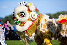 Dragon Boat, Opening Ceremony, Festivals, Events, Bird, Birds, Birdwatching