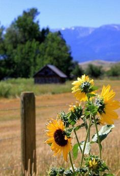 More than country charm! Country Charm, Country Life, Country Living, Country Roads, Happy Flowers, Wild Flowers, Beautiful Flowers, Sun Flowers, Sunflowers And Daisies