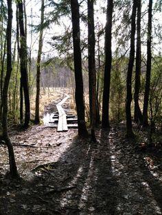 Kurjenrahkan kansallispuisto, Savojärven kierros
