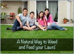 Learn how to make compost tea as a natural weed and feed for lawns. Excess lawn weeds means low soil nutriment. Compost tea means healthy lawns with less weeds.