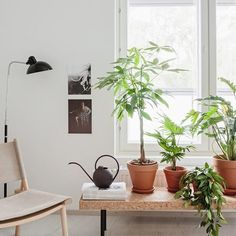 You can never have too many plants 🍀🌿🍃🌵My styling for Keva rental flats / photography by @kuviophoto 📷