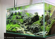 2015 AGA Aquascaping Contest - Entry #181