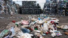 Scientists found a new species of bacteria in the debris around a Japanese recycling plant. With the help of two plastic-digesting enzymes, it can eat plastic and use it as a main food source.