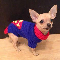 A super dog.