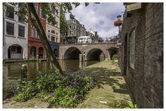 Purple flowers Oudegracht by Thomas van Galen on 500px