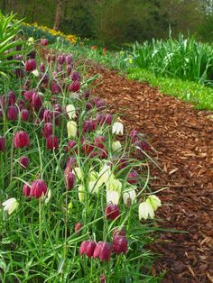 Mulch marching on an aisle while these white and maroon blossoms bow on the way. Garden Park, Diy Garden, Wooden Garden, Garden Plants, Garden Ideas, Path Ideas, Walkway Ideas, Flower Garden Images, Stone Garden Paths