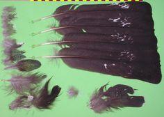 Western Capercaillie - Auerhuhn (Tetrao urogallus)